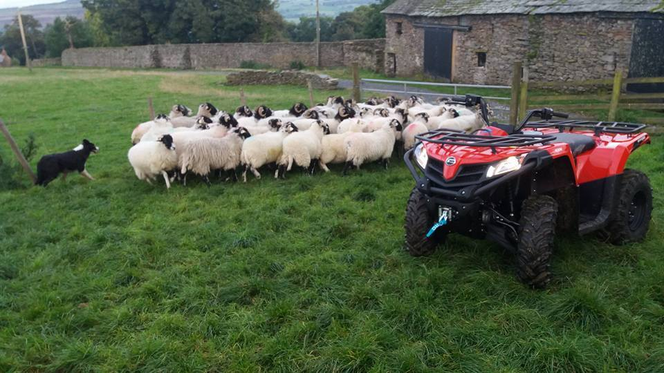 Quadzilla Quad Bike and sheep