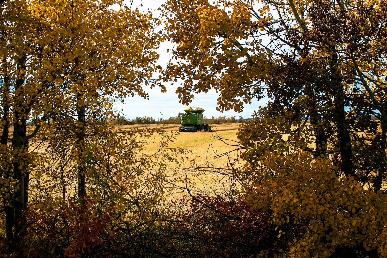 combine harvester in autumn