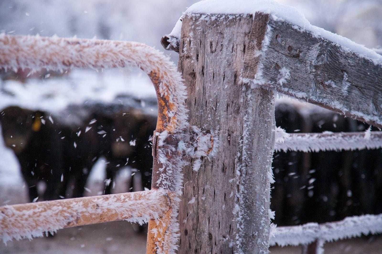 farm gate in frost